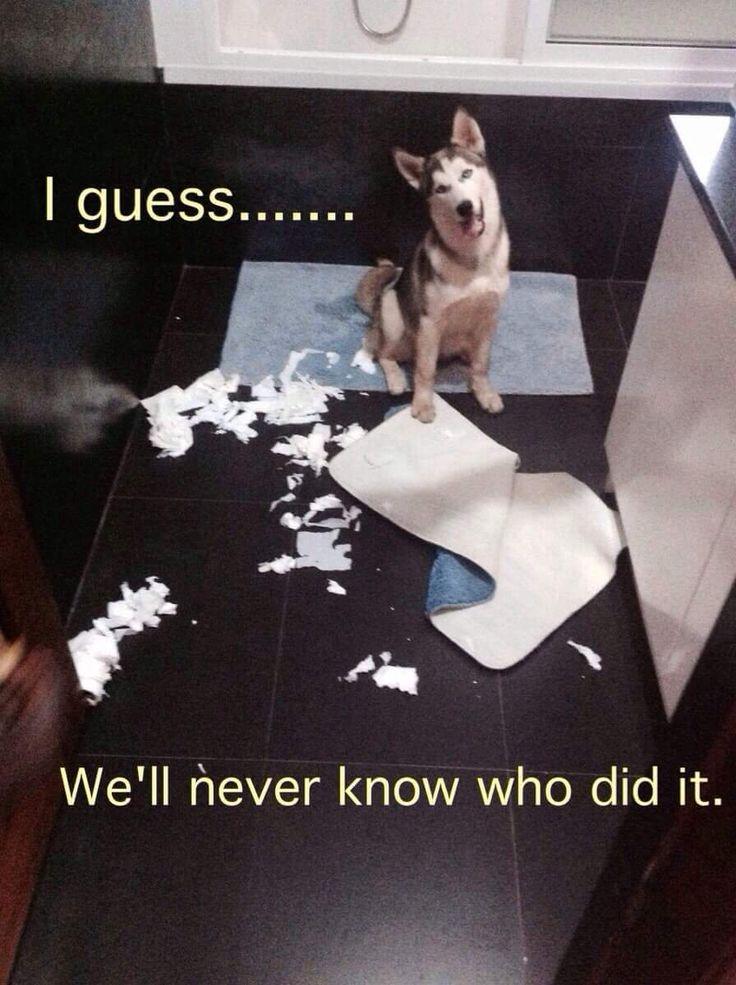 Husky Innocence