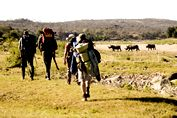 Olifants River Back Packing Trail The trail stretches over 4 days and 3 nights and covers approximately 42km.