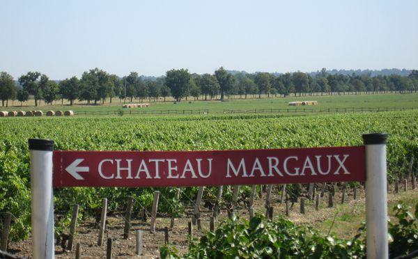 Chateau Margaux vineyards www.bcfw.co.uk