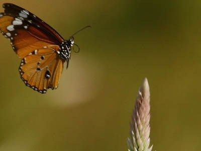 Butterfly wallpaper-HD Desktop background Images full size royalty free wallpapers