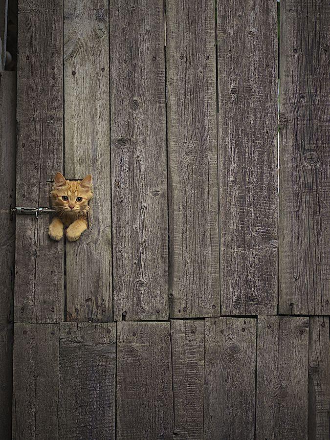 """Cat in gate  / Photo """"Pocket tiger."""" by Roman Kozhukhov."""