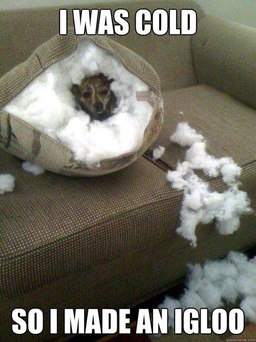My doxie did this with a dog bed.  Funny!