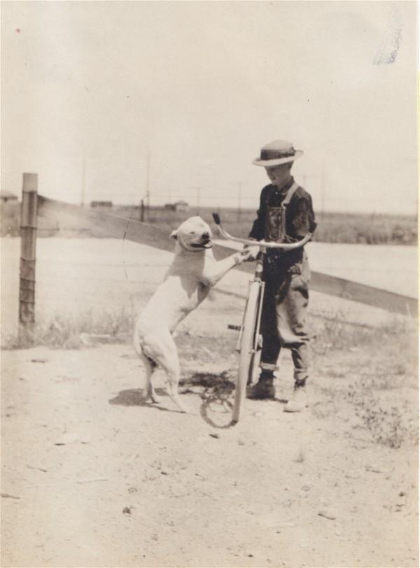... Dog on Pinterest | Pitbull children, Pit bull art and Dog babysitter