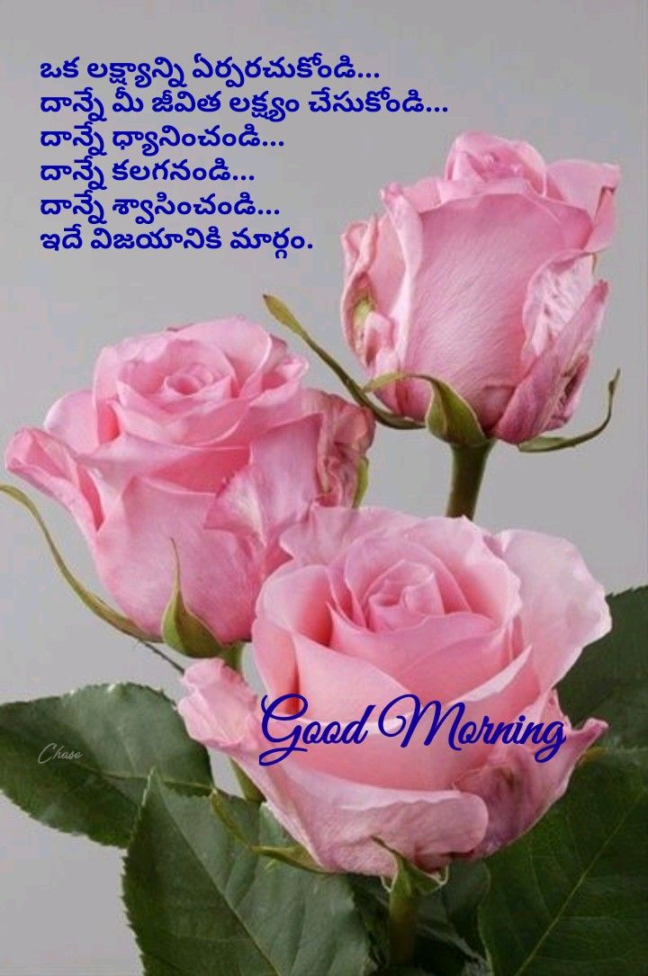Pin By Chandra Sekhar On Good Morning In Telugu Beautiful Roses Pink Roses Beautiful Flowers
