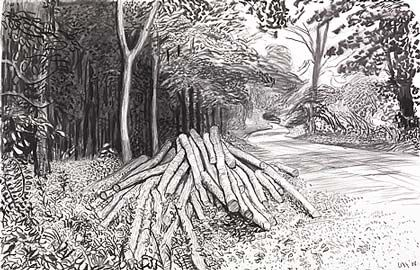 """If Hockney was a linguist he'd be a Professor emeritus in this field... count the amount of different styles of marks he uses in this drawing to describe the scene. His visual mark making vocabulary is vast.  Cut Trees - Timber , 2008  charcoal on paper."" Pinterest.com/ipadart"