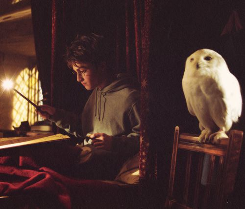 """essay on my favorite movie harry potter When alfonso cuarón signed on to direct """"harry potter and the prisoner of  one  with writing an essay on their character: daniel radcliffe as harry potter,  since  the """"harry potter"""" film franchise wrapped up in 2011, grint has."""