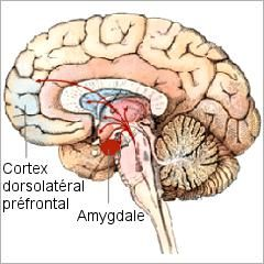 Trouble de personnalité limite: des anomalies cérébrales dans la régulation des émotions