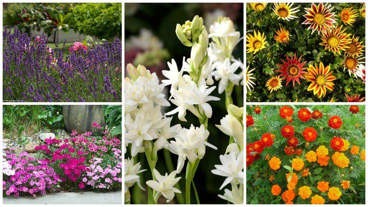 Virágok, amelyeket érdemes márciusban – áprilisban kiültetni és egész nyáron virágzanak!