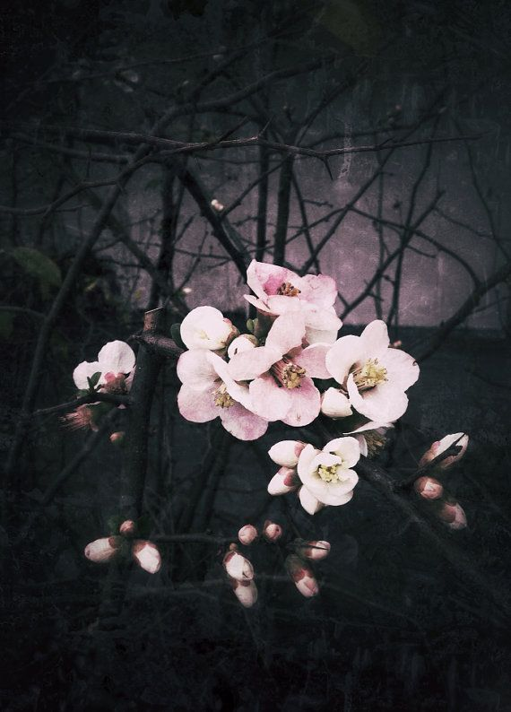 Pink Blossoms 5x7 fine art photography by RDiepenheimFoto on Etsy, $12.00