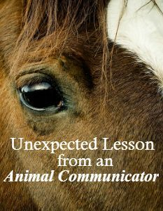 Unexpected Lesson from an Animal Communicator | Savvy Horsewoman