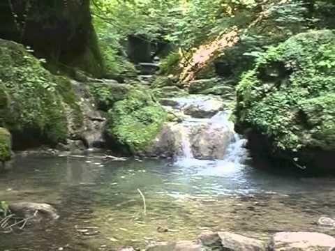 Vizek, vízpartok növényei - YouTube