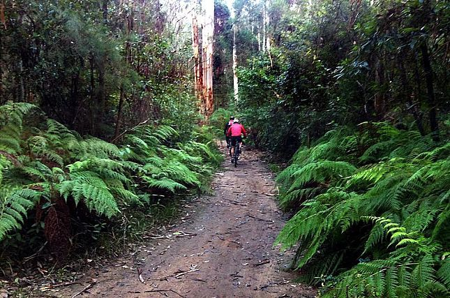 Fresh Air Daily asked fans on Blue Mountains Australia's Facebook page to comment on their favourite bike trails. We reveal the six most popular.