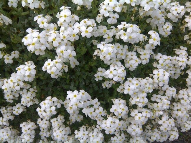 Blumen, weiss, flowers, white, free wallpaper, free Stock photo
