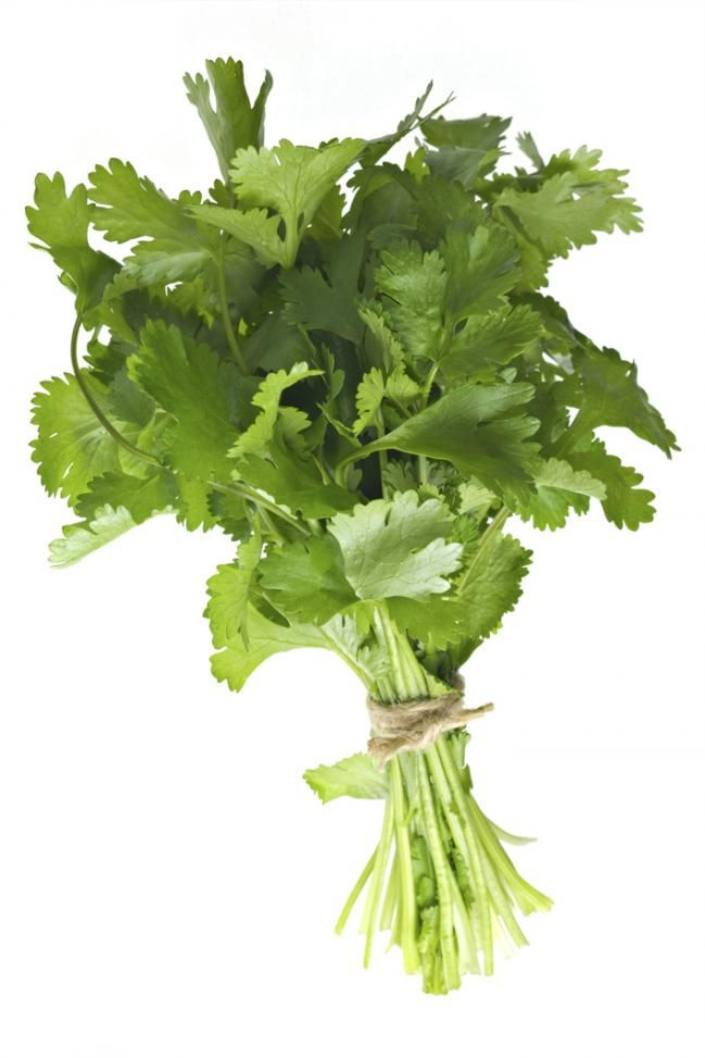 10 hierbas aromáticas para cultivar en casa