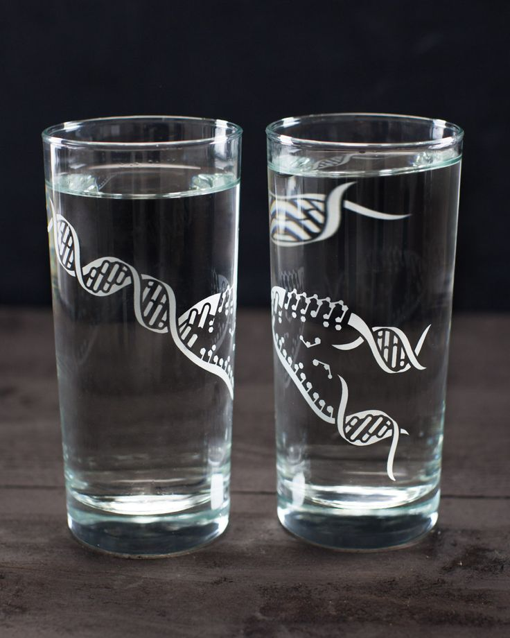 The Elegance of DNA Water Glass