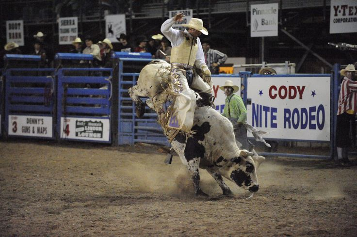 Bull Riding At The Cody Nite Rodeo In Cody Wy Learn