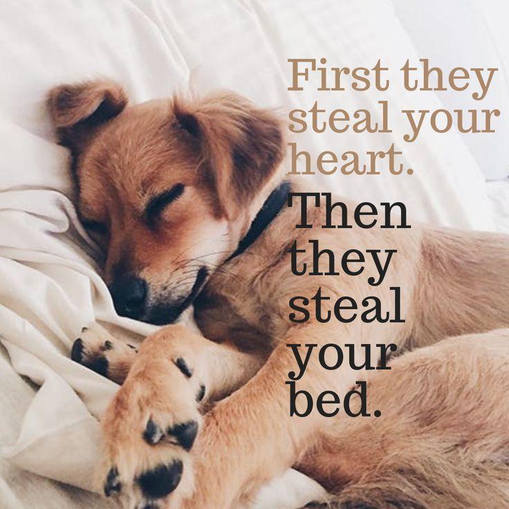 2 in 1 Katzenmatte und Bett