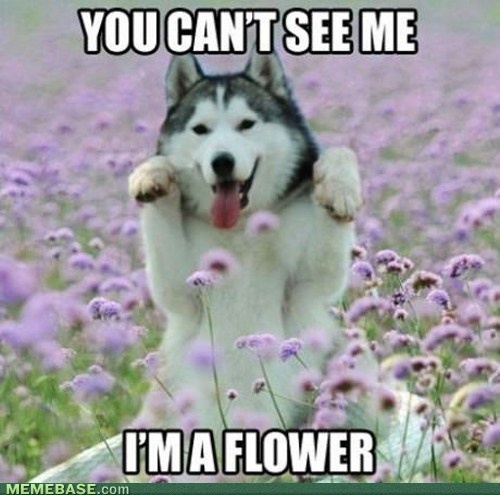 internet memes - Perfect DisguiseFunny Husky, Moonmoon, Funny Dogs, So Cute, Silly Dogs, Flower Power, Pretty Flower, Moon Moon, Animal