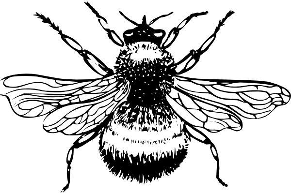 Bumblebee clip art Free Vector - ClipArt Best - ClipArt Best