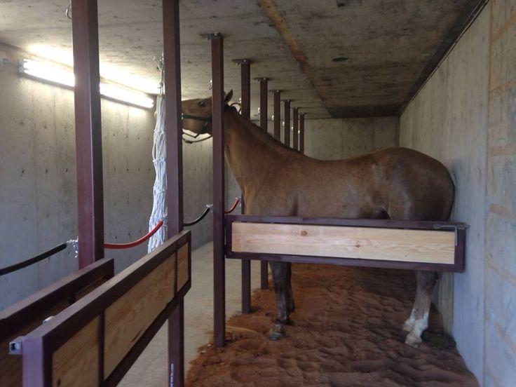 Horse tornado shelter