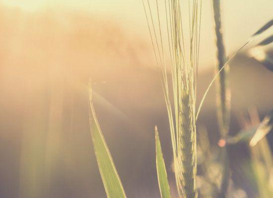 mlodzikova morning sun