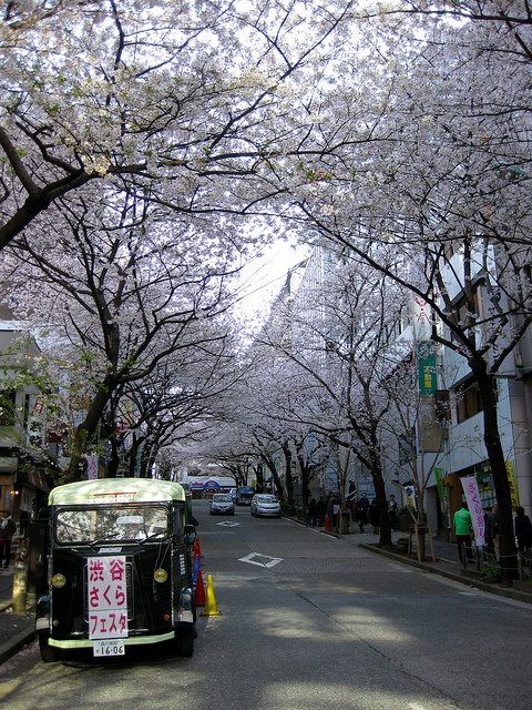 Zama, Japan (just outside Tokyo)!!! I miss the cherry blossoms and the cherry blossom festivals...