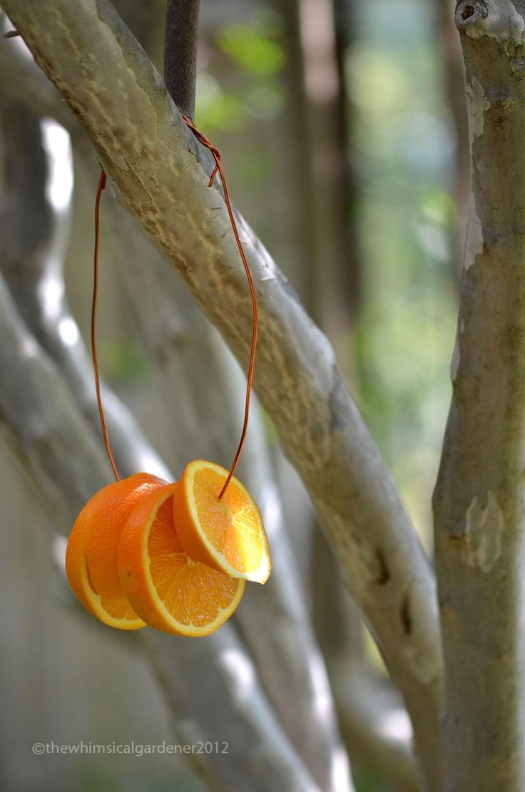 18 best bird feeders images on pinterest for the birds bird
