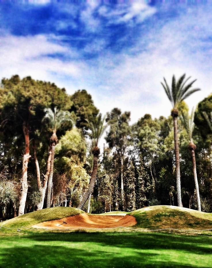 Les seins de BB - Royal Golf de Marrakech.  © Copyright Yves Philippe