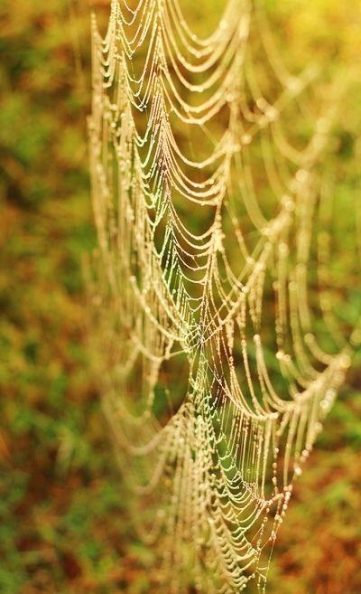 Rolenz's Photos - ViewBug.com - ViewBug.com