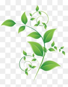 Tea Pattern Decorative Pattern Leaf Pattern Leaf Vector Green Leaves Vector Diagram Tea Pattern Green Vector Leaf Vecto Leaves Vector Plant Vector Fruit Splash
