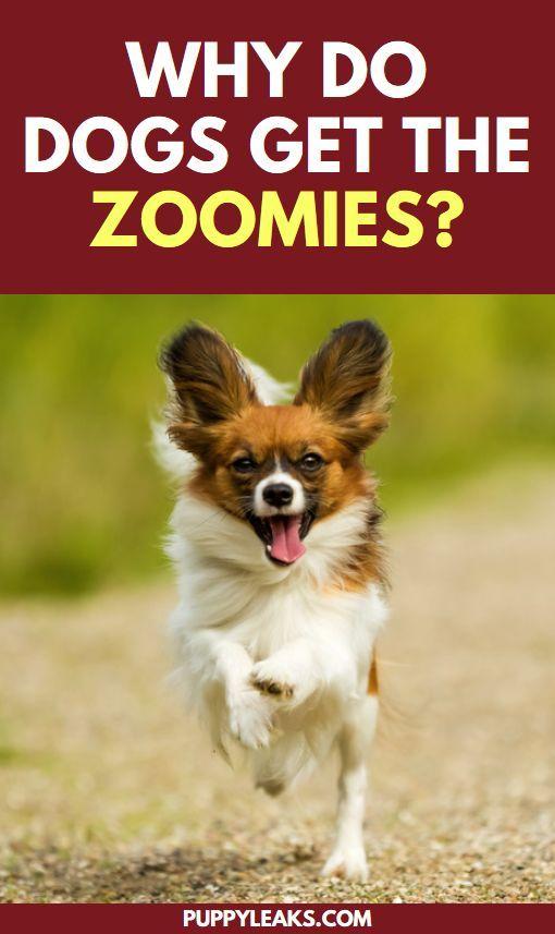 Take photos of dog runs around like crazy after bath