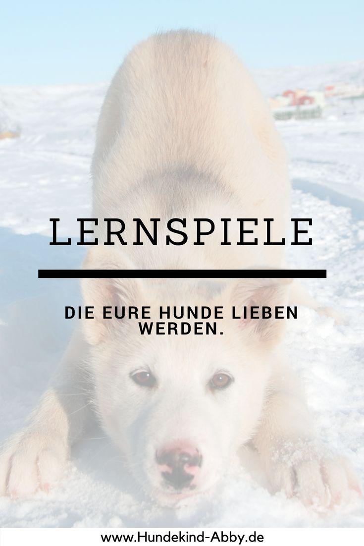 #Hund #Hundeblogger #Hundeliebe #Wissen #Beschäftigung Hunde    Erziehung    DIY    Wissen    Gesundheit