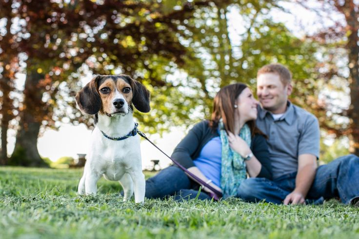 engagement pictures with dog by Candace Jeffery Photography