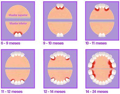 ¿En qué orden aparecen los dientes?  En el siguiente gráfico mostramos el orden de aparición de los dientes en la mayoría de los bebés.