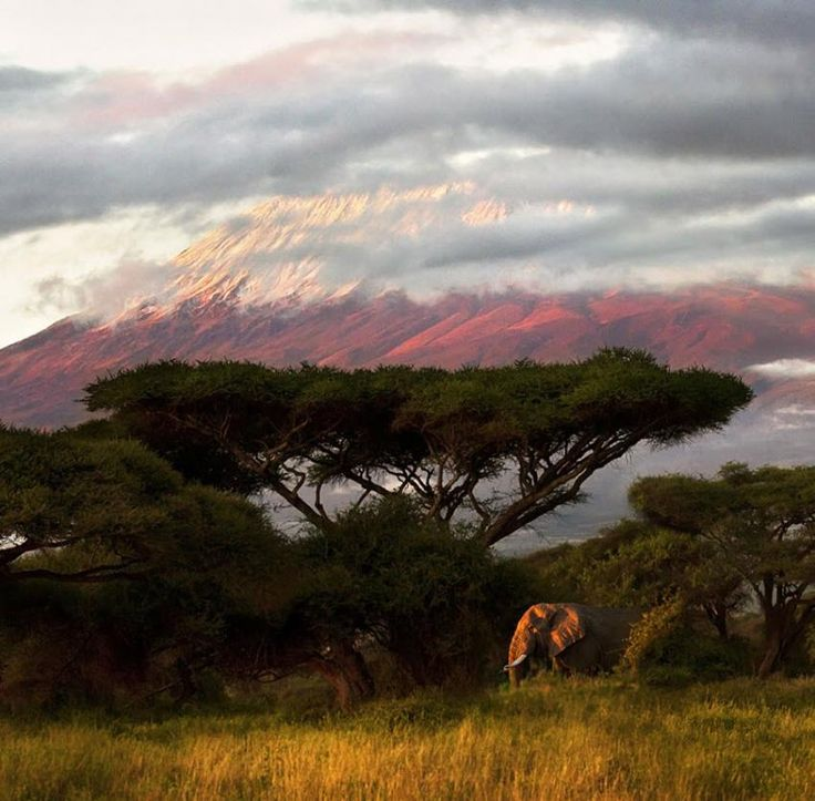 Peisaj... şi un elefant