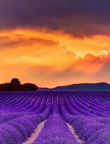 Lavender Sunset, France
