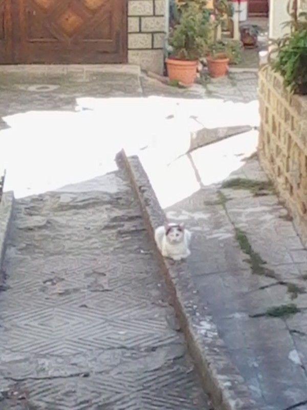 Pisica in Velico