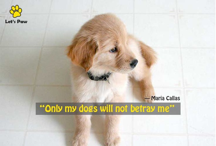 Only my dogs will not betray me. —Maria Callas