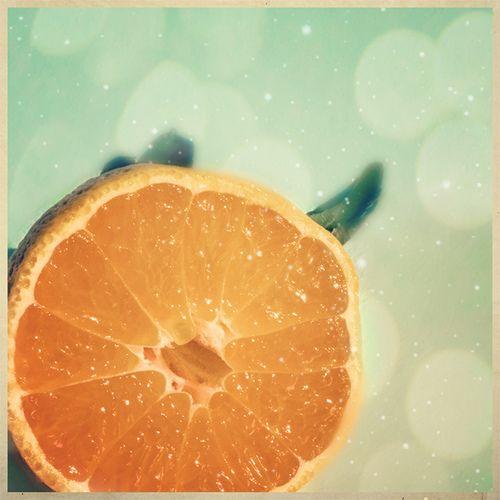 citrus peels as insect repellent essay Free essays mosquito repellent study essay orange peels as mosquito repellents as an ingredient of a insect repellent fabric conditioner in partial.