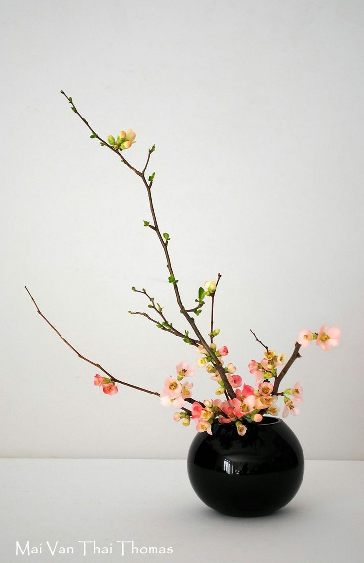 Ikebana, Mai Van Thai Thomas.                                                                                                                                                                                 Plus