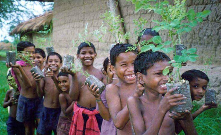 Meninos com a moringa Moringa, a planta que purifica a água e poderia acabar com a fome mundial