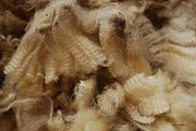 Extracting Lanolin- I have a ton of junk fleece I'd love to try this with.