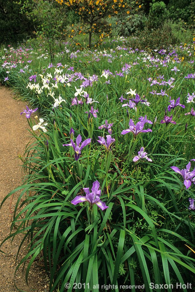 146 best low water garden design images on pinterest