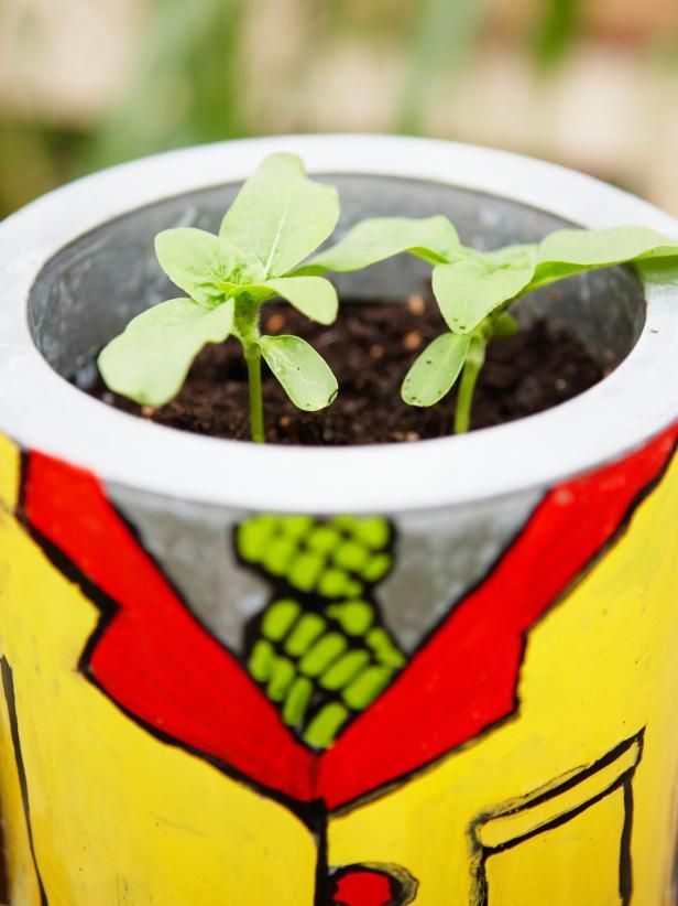Sunflower Seedlings in a colorful pot