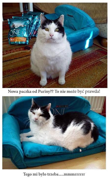 Paczka za aktywność od Puriny ONE! Tofik jest wniebowzięty :) #kampaniapurinaone https://www.facebook.com/photo.php?fbid=638501319519047&set=o.145945315936&type=1&ref=nf
