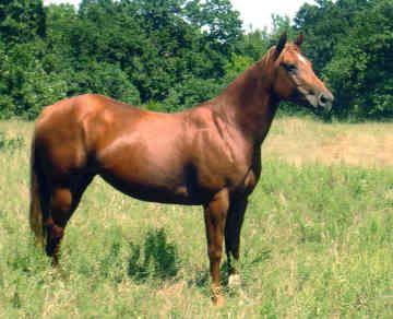 All American Quarter Horse...looks just like Gunner