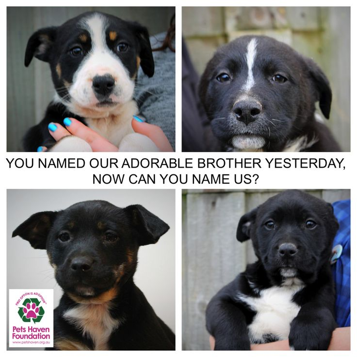 CAN YOU GIVE US SOME NAMES TOO?    You met our brother Yoda yesterday who was in need of a cute name to suit his cute nature! We thought there were so many great names suggestions that we wanted to be a part of it too! Do you think you could name us? We are 2 boys (above) and 2 girls (below). Thanks for helping us!