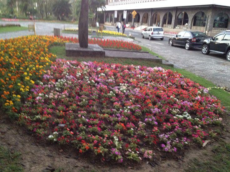 Mais flores em Blumenau