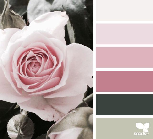 rose tones | design seeds | Bloglovin'