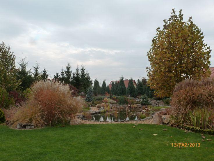 oczko jesień /pond and grass in autumn